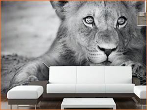 Обои на всю стену с изображением льва, черно белые